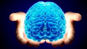 brain-29-11-2017